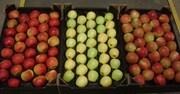 Оптовые поставки польского яблока